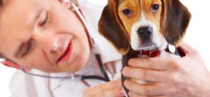 Read more about the article Prendre soin des animaux: Produits vétérinaires